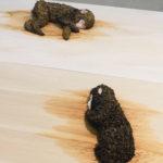 祖先は眠る( 二匹の 猿) The Ancestor is Sleeping (Two Monkeys) / Mitsunori KIMURA