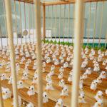 風景を見る鳥 Birds See a View / Mitsunori KIMURA